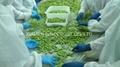 IQF Glazed Edamame in pods,Frozen Glazed Edamame in pods,IQF glazed soybeans 5