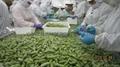 IQF Glazed Edamame in pods,Frozen Glazed Edamame in pods,IQF glazed soybeans 3