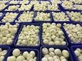 冷凍洋蔥,速凍洋蔥 12