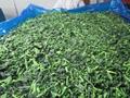單凍菠菜段,盤凍菠菜段,冷凍菠菜葉球 11