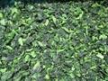 單凍菠菜段,盤凍菠菜段,冷凍菠菜葉球 13