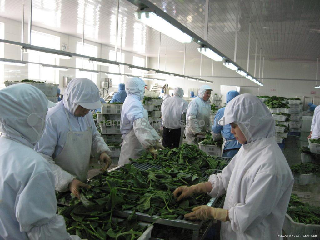 IQF Chopped Spinach,IQF Spinach Cut,BQF Cut Spinach,Frozen Chopped Spinach 16