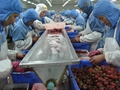 IQF Whole Strawberries,Frozen Whole Strawberries,Grade A/A+B/B/C 10