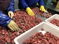 IQF Whole Strawberries,Frozen Whole Strawberries,Grade A/A+B/B/C 11