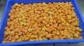 IQF Sweet Potato Dices,Frozen Sweet Potato Dices,IQF Cut Sweet Potato 9