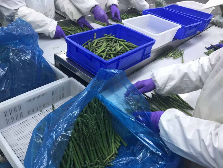 冷凍綠蘆筍尖段,速凍綠蘆筍尖段 7