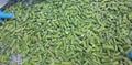 冷凍綠蘆筍尖段,速凍綠蘆筍尖段 3