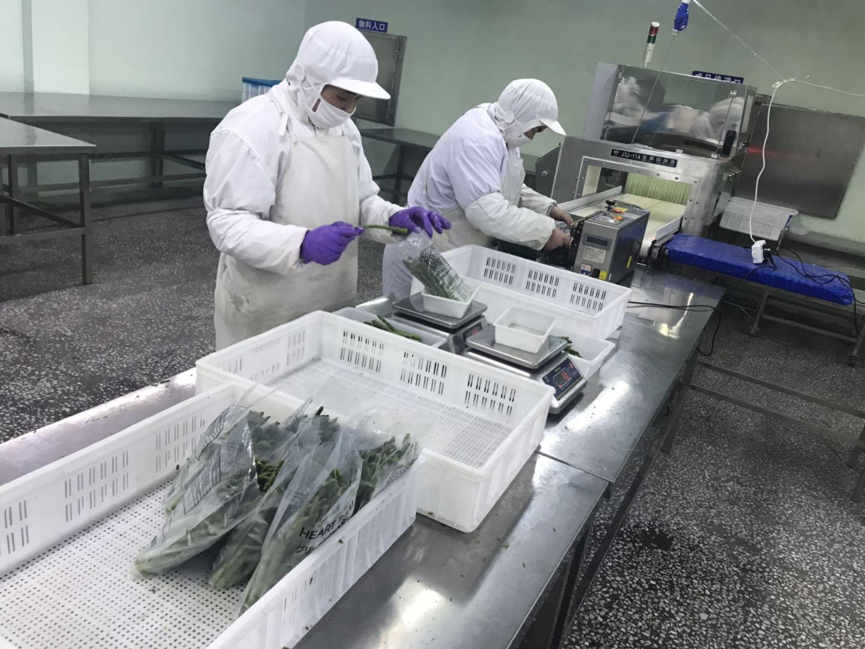 冷凍綠蘆筍尖段,速凍綠蘆筍尖段 10