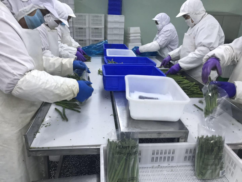 冷凍綠蘆筍尖段,速凍綠蘆筍尖段 8