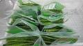 冷凍綠蘆筍尖段,速凍綠蘆筍尖段 12