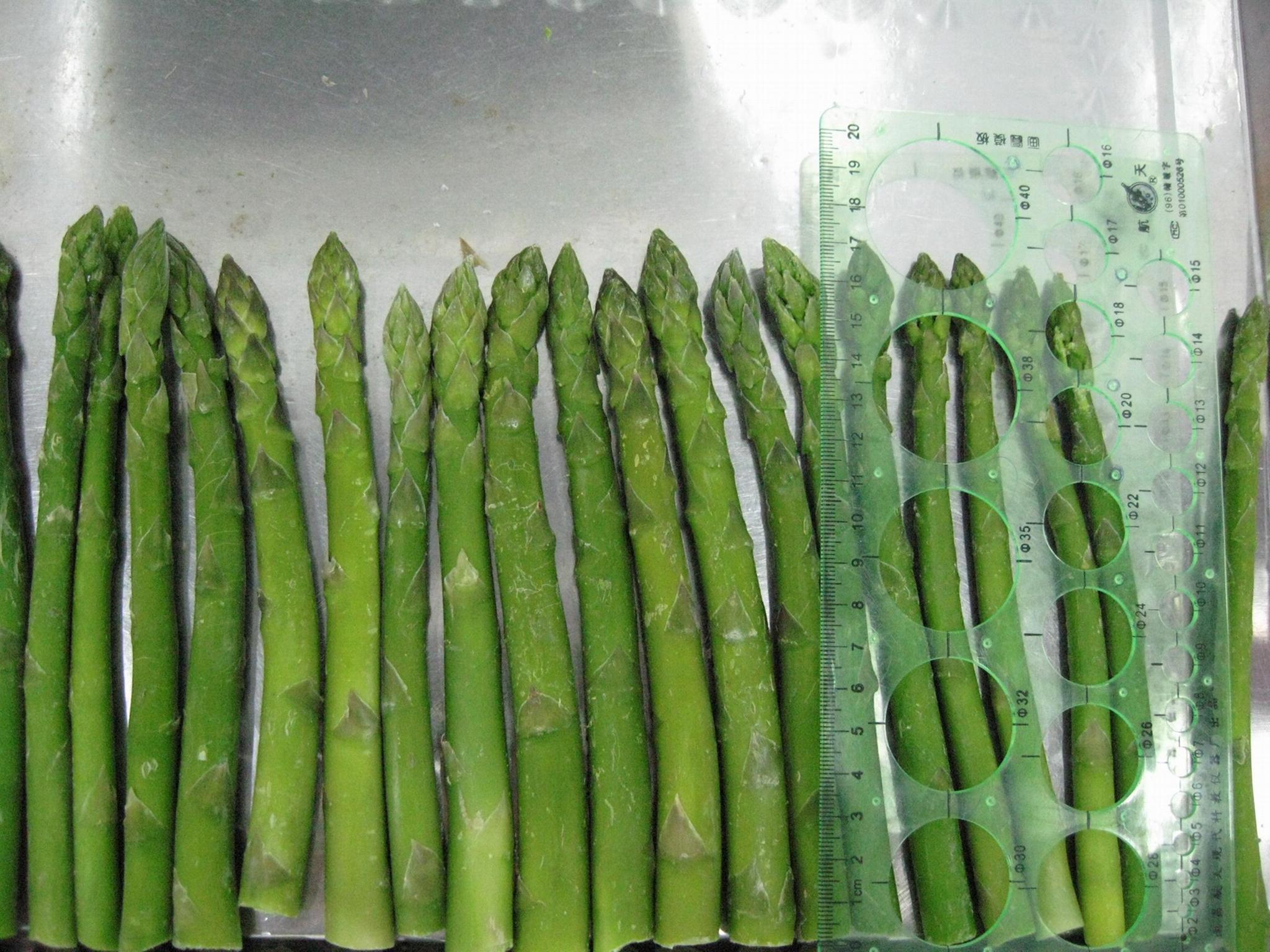 冷凍綠蘆筍尖段,速凍綠蘆筍尖段 13