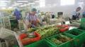 冷凍綠蘆筍尖段,速凍綠蘆筍尖段 15