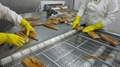 IVP Packed, Frozen Roasted Eel,Frozen Grilled Eel,Unagi Kabayaki in vacuum bag 7