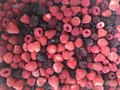 IQF mixed berries,Frozen mixed berries