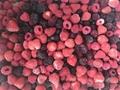 IQF mixed berries,Frozen mixed berries 4