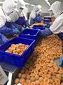 IQF Apricots Halves,Frozen Apricot Halves,peeled,blanched