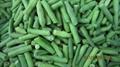 IQF Cut Green Beans,Frozen Cut Green Beans,IQF Green Beans Cuts 10