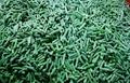 IQF asparagus beans cuts,Frozen cut