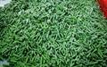 IQF Asparagus Beans ,Frozen Cowpeas,IQF Cowpeas,wholes/cuts 7