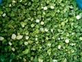 冷凍青蔥丁,速凍青蔥丁 5