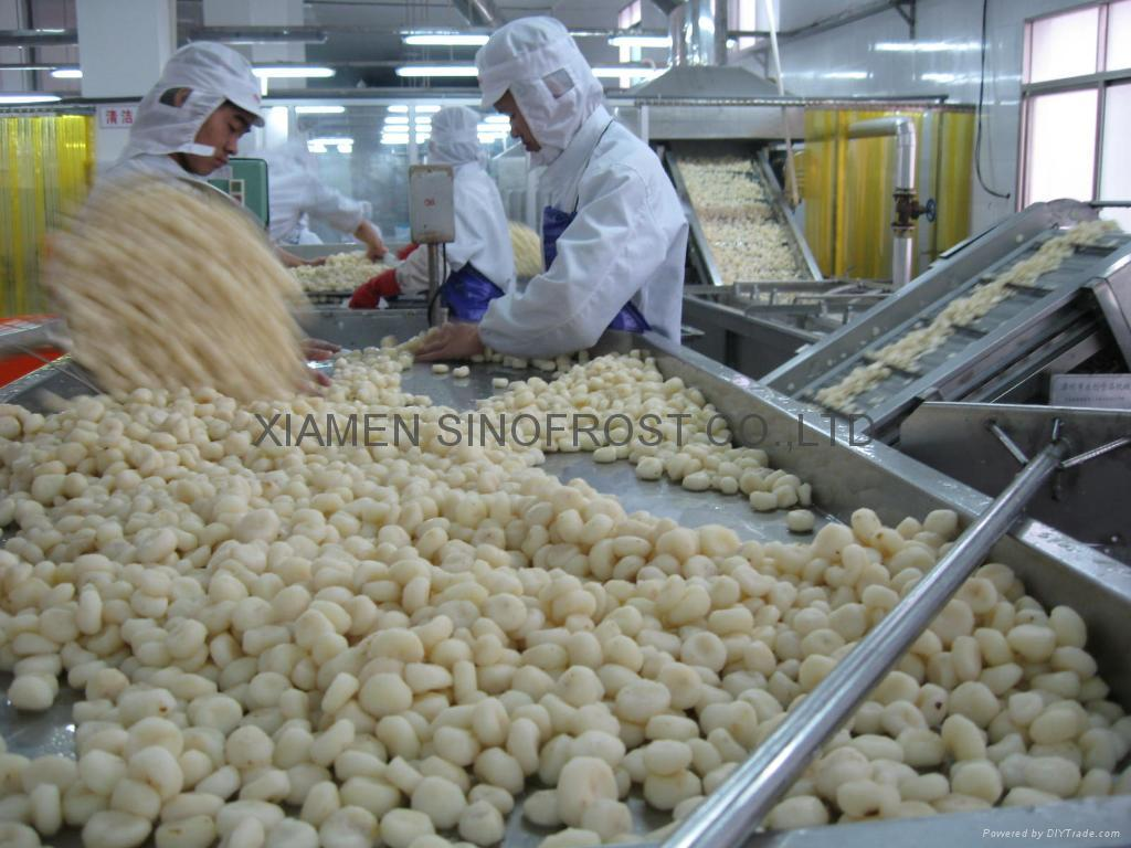 IQF Water Chestnuts Wholes,IQF Whole Water Chestnut,Frozen Water Chestnut Whole 7