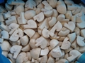 IQF champignon mushrooms wholes,IQF whole champignon mushrooms,frozen mushrooms