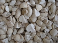 IQF champignon mushrooms cuts,IQF cut champignon mushrooms,frozen champignon
