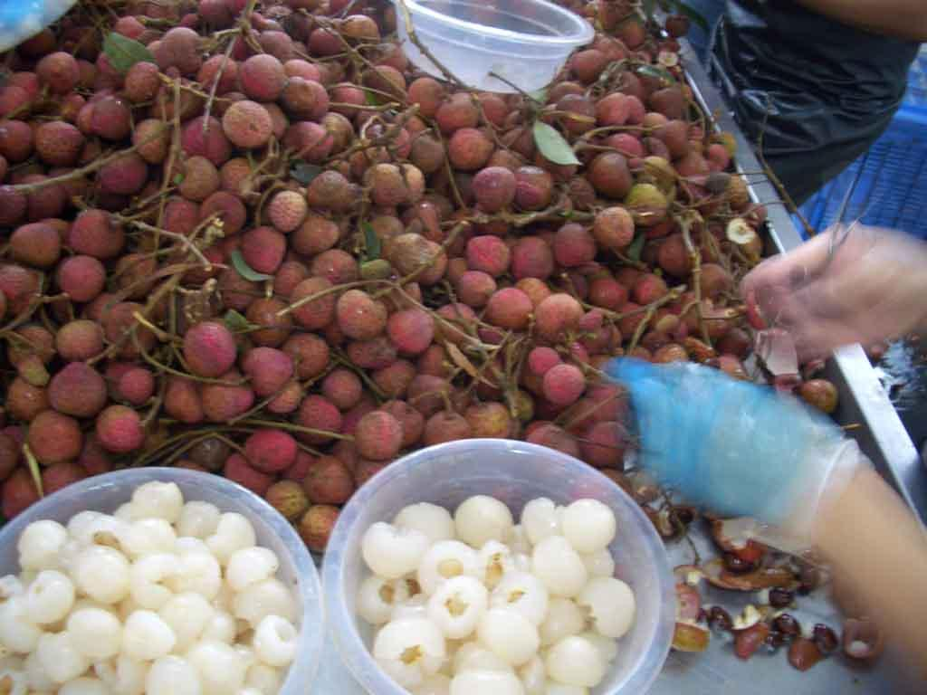 IQF Peeled Lychees,Frozen Peeled Lychees,IQF Peeled Litchi,IQF Pitted Lychees 11