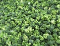冷凍綠花菜,速凍綠花菜 3