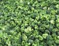IQF Broccoli Florets,Frozen Broccoli Florets