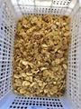 Mushrooms in SO2,Champignon Mushrooms in SO2,Preserved Mushrooms in SO2