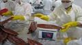 IVP Packed, Frozen Roasted Eel,Frozen Grilled Eel,Unagi Kabayaki in vacuum bag 3