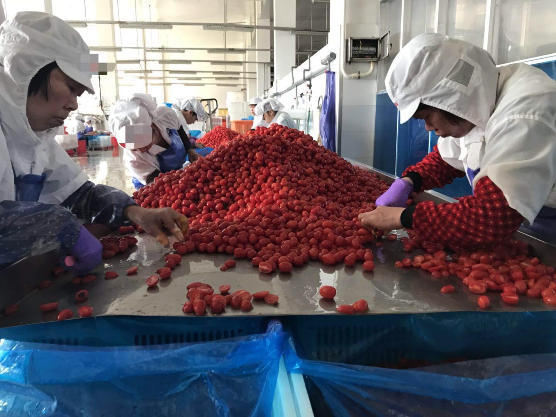IQF cherry tomatoes,Frozen cherry tomato,wholes/slices/ha  es/dices 10