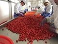 IQF cherry tomatoes,Frozen cherry tomato,wholes/slices/ha  es/dices 11