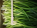 IQF spring onions ,IQF green onions,IQF welsh onions(dices/cuts/slices/chopped)