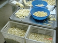 IQF white asparagus cuts & tips,Frozen White Asparagus tips & cuts 11