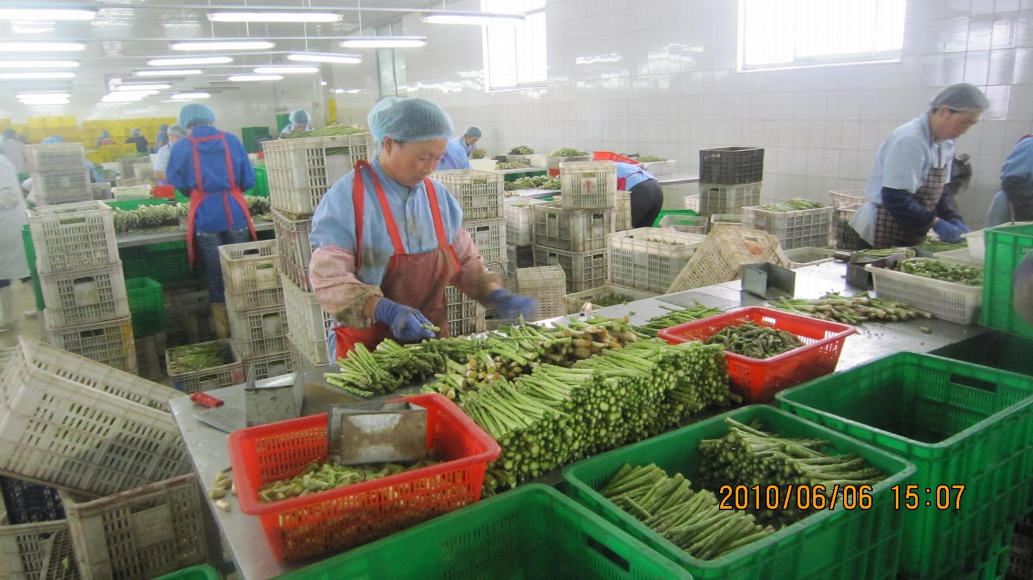 IQF Green Asparagus Cuts & Tips,Frozen Green Asparagus Tips & Cuts 9