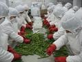 IQF Green Asparagus Cuts & Tips,Frozen Green Asparagus Tips & Cuts 15