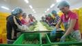IQF Green Asparagus Cuts & Tips,Frozen Green Asparagus Tips & Cuts 10