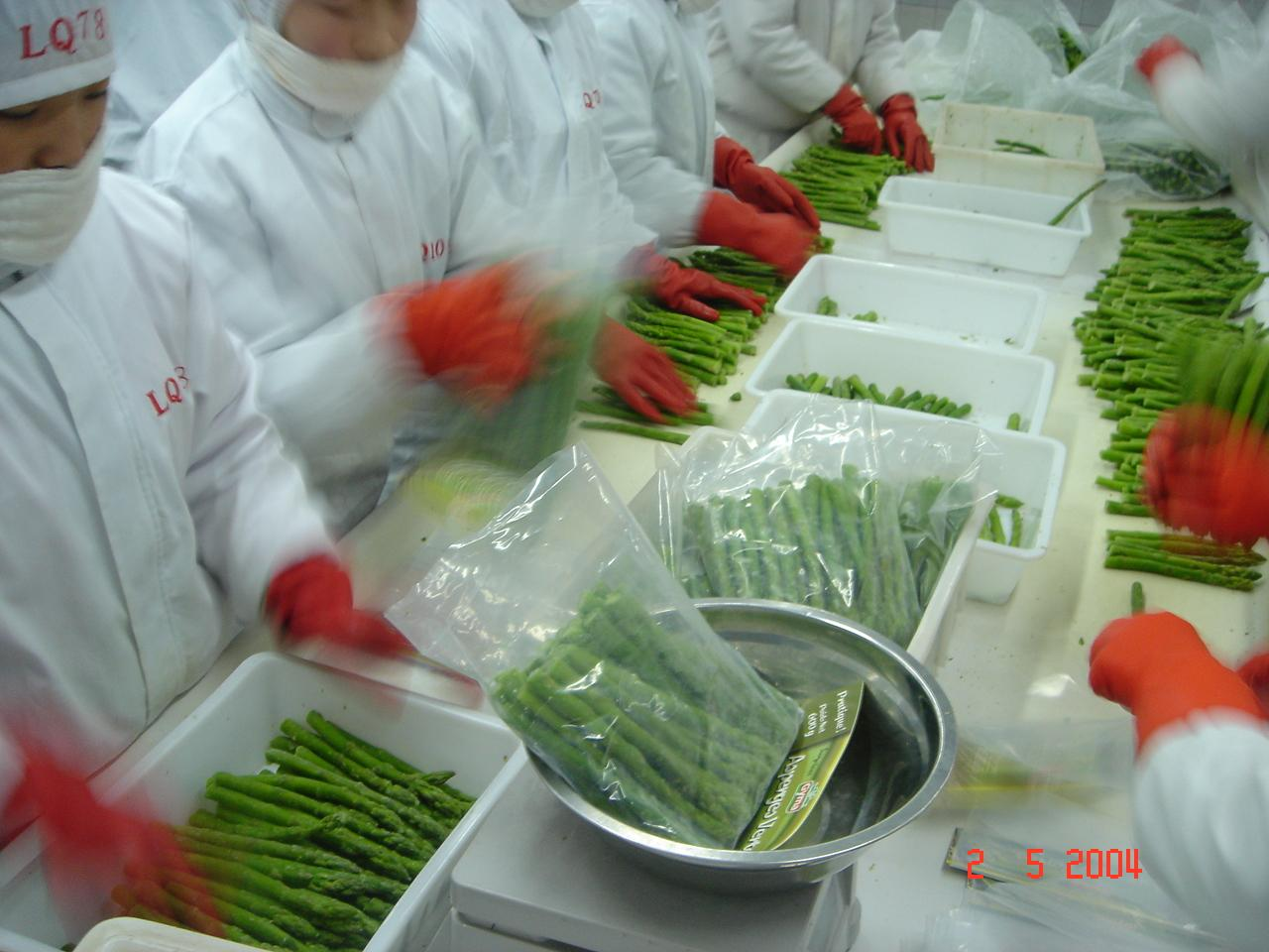 IQF Green Asparagus Cuts & Tips,Frozen Green Asparagus Tips & Cuts 17
