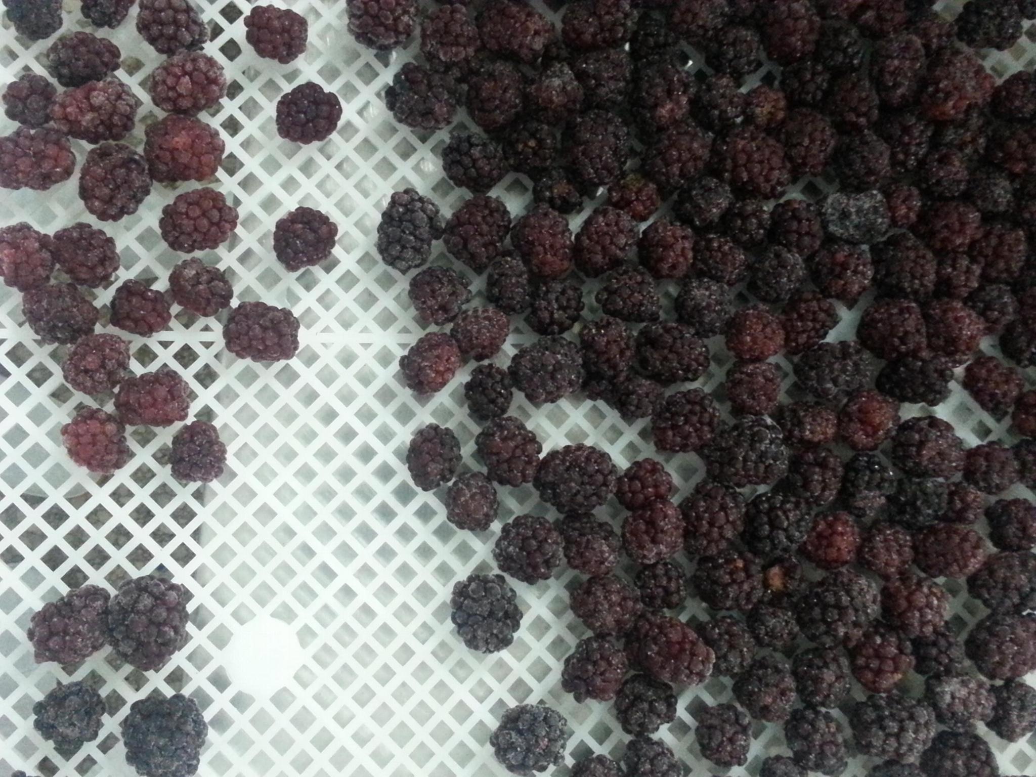 冷凍黑莓,速凍黑莓 9