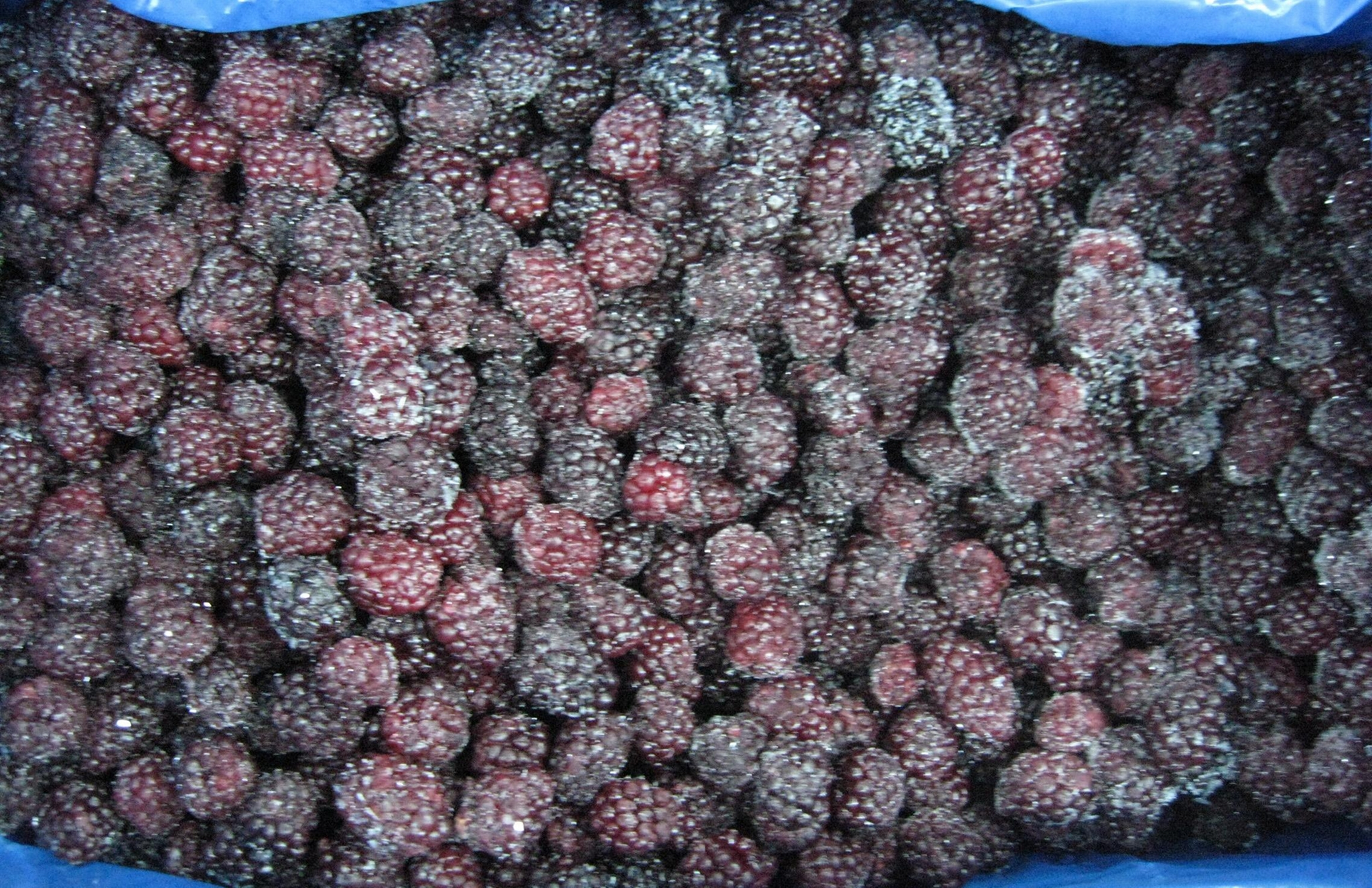 IQF Blackberries,Frozen Blackberries,cultivated 2