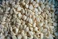 冷凍蒜瓣,冷凍蒜丁,冷凍蒜泥 3
