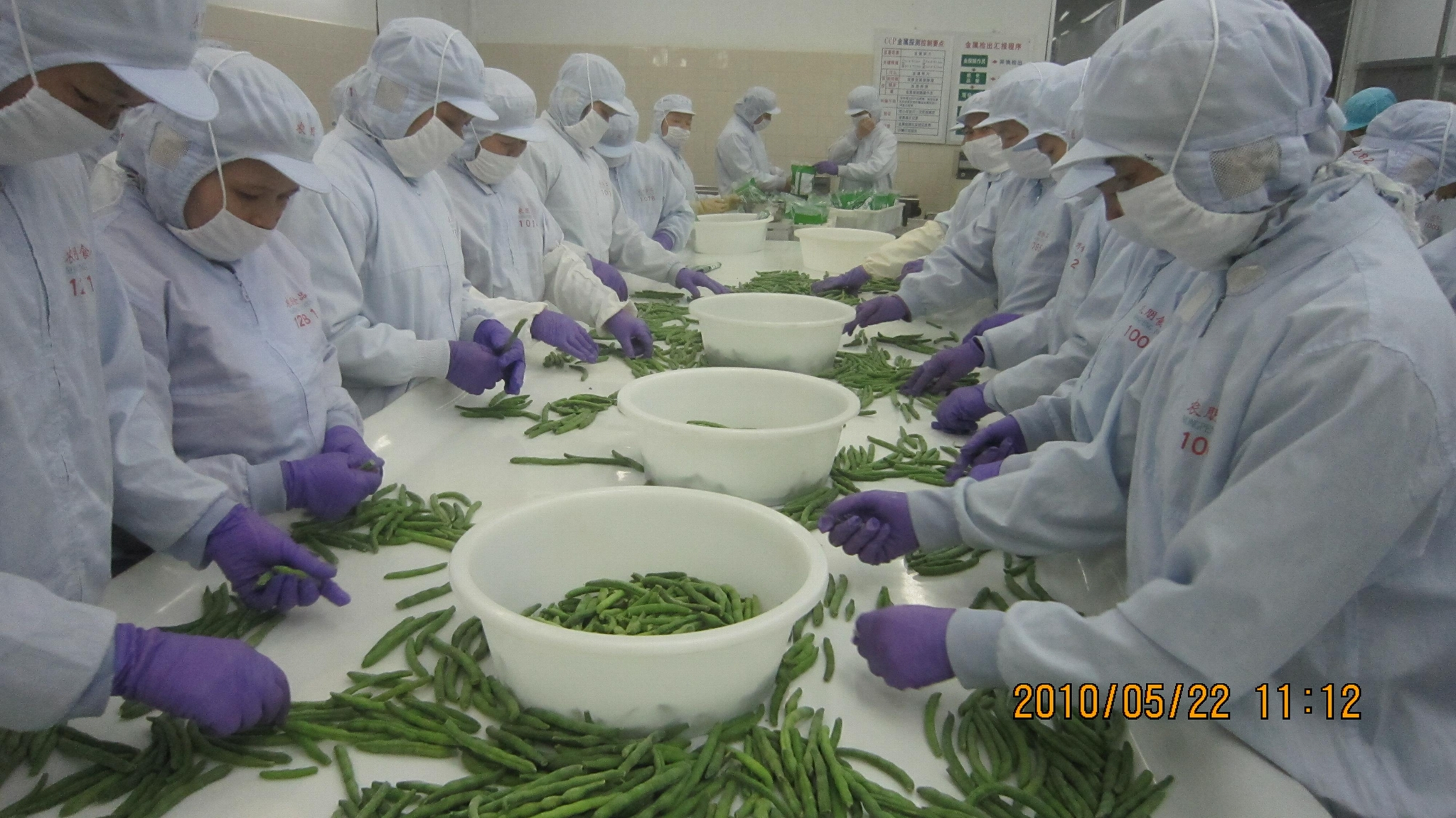 IQF Whole Green Beans ,Frozen Green Beans Wholes,IQF cut green beans 14