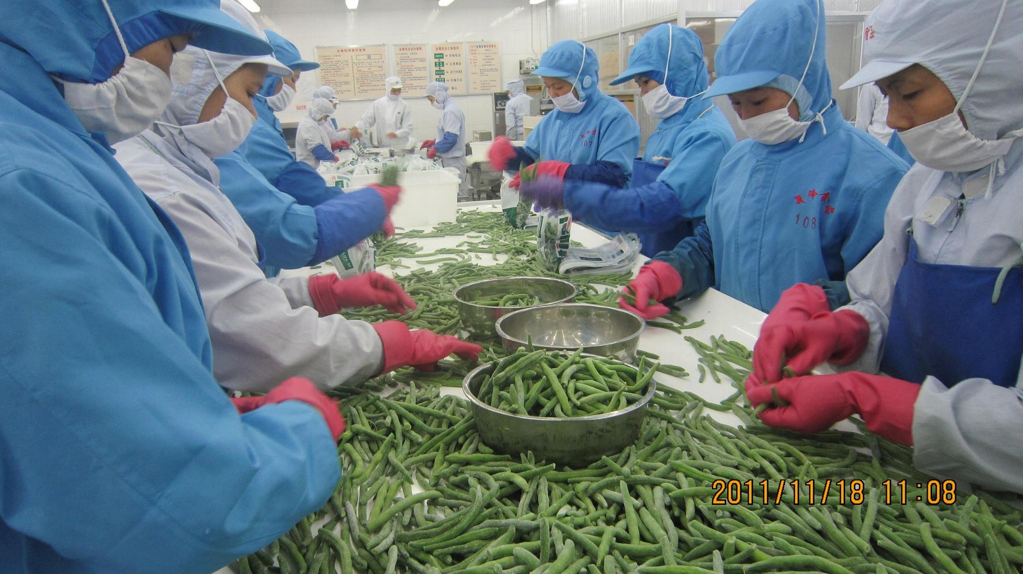 冷凍青刀豆,速凍青刀豆 15