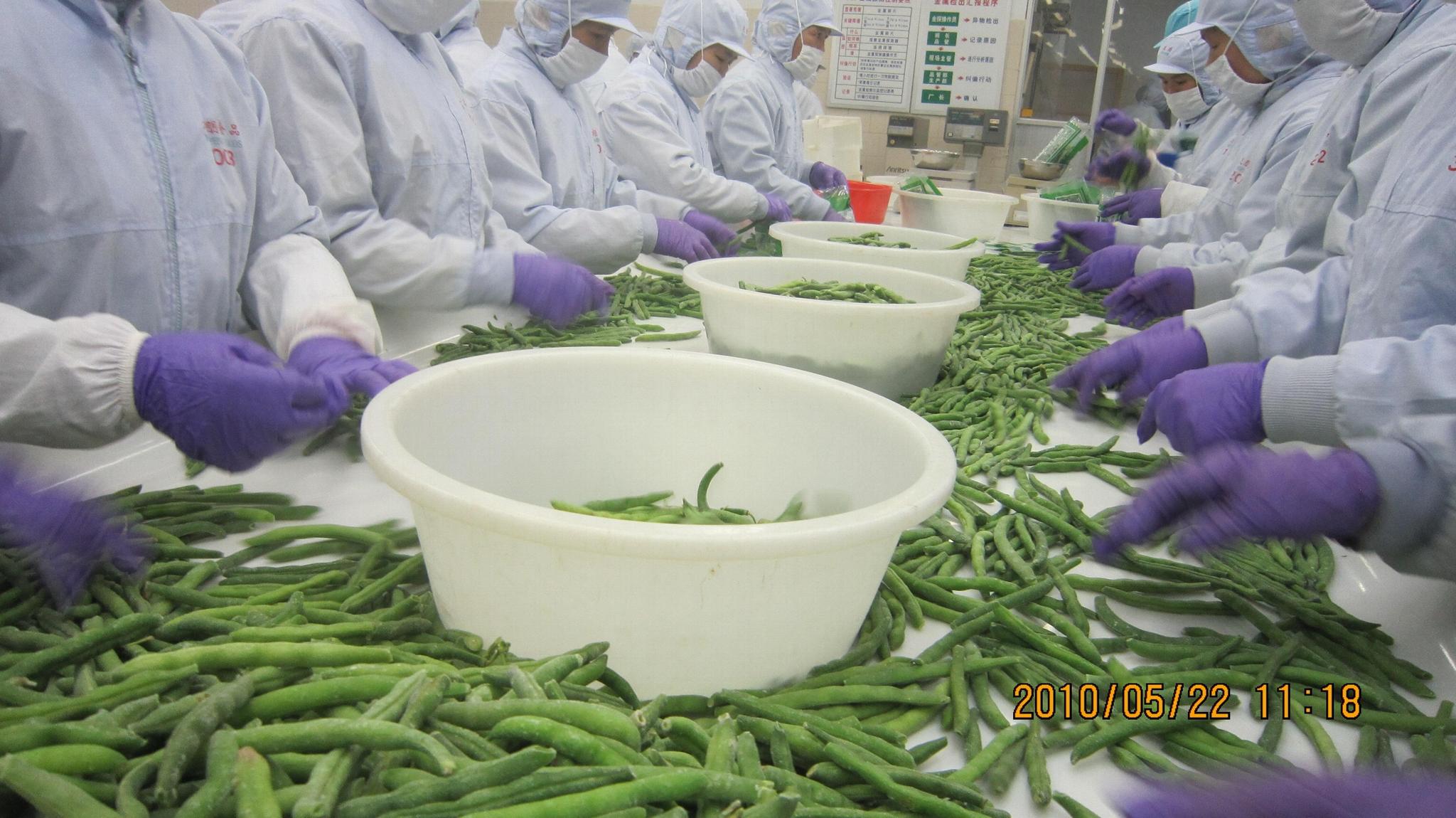 冷凍青刀豆,速凍青刀豆 16