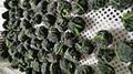 IQF Chopped Spinach,IQF Spinach Cut,BQF Cut Spinach,Frozen Chopped Spinach 19