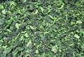 IQF Chopped Spinach,IQF Spinach Cut,BQF Cut Spinach,Frozen Chopped Spinach 2