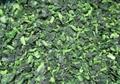 IQF Chopped Spinach,IQF Spinach Cut,BQF Cut Spinach,Frozen Chopped Spinach 3