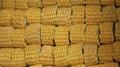 IQF Sweet Cob Corn,Frozen Sweet Corn on